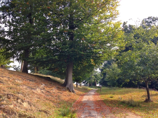 knole in autumn