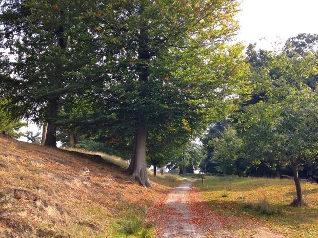 knole in autumn