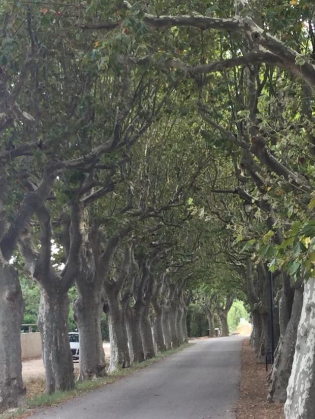 avenue des platanes.jpg
